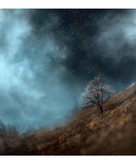 Картина Дерево и ночь фото